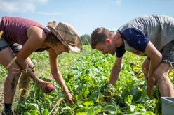 Akwandze Agricultural Finance